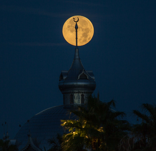 Moon and Bird Silhouette on Supermoon