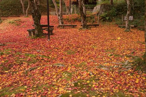 【写真】2012 紅葉 : 笠置山もみじ公園/2020-05-28/IMGP6129