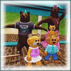 SL10B Bear