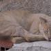 Small photo of Poros cat