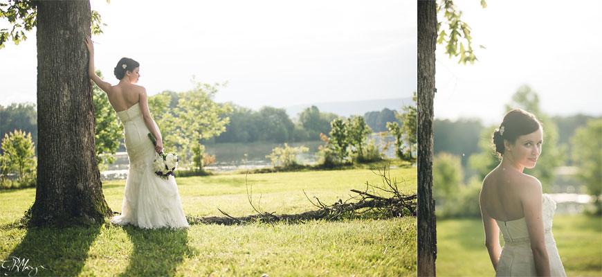 Bride-tree-sun