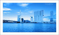 Rotterdam Blues