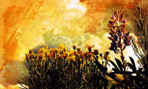 "flowers sunset floral digital photography colorado artist skies unique sunflower coloradosprings wildflower photorestoration lupine professionalphotographer goldenhour artisticphotos artography ""digitalphotography"" reecyporter reecreations reecreationsco"