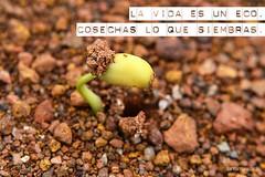 cosechas_lo_que_siembras