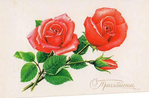 greeting card, vintage greeting card,  card, felicitation, old fashion rose, red flower, pink flower, vintage flower, vintage rose, shabby chik rose,  vintage roses , pink roses , red roses , desert roses , rose  mixed media, rose  original, rose  illustration,