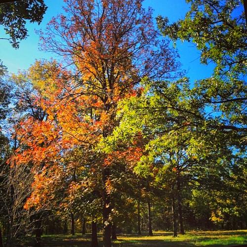 Fall color on Apple Tree Farm