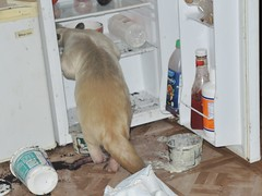 Pua raids the fridge