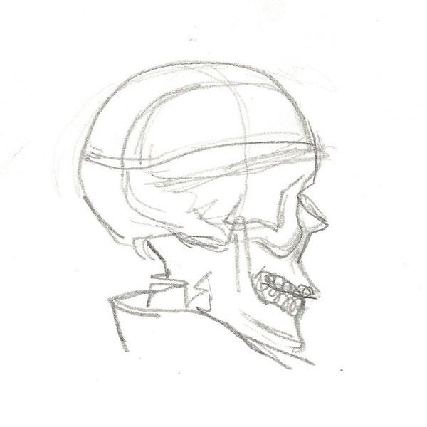 Skull_Sketch_05