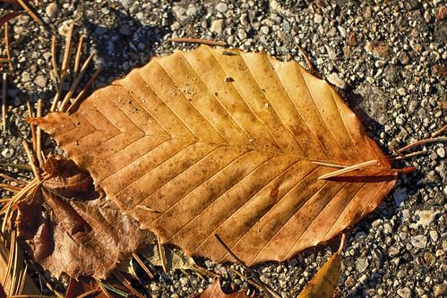 11-13 fall-9797-Edit-5