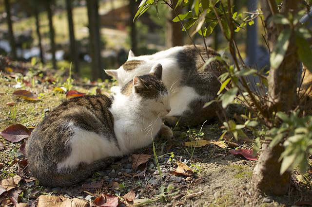 哲学の道で哲学する猫 その4