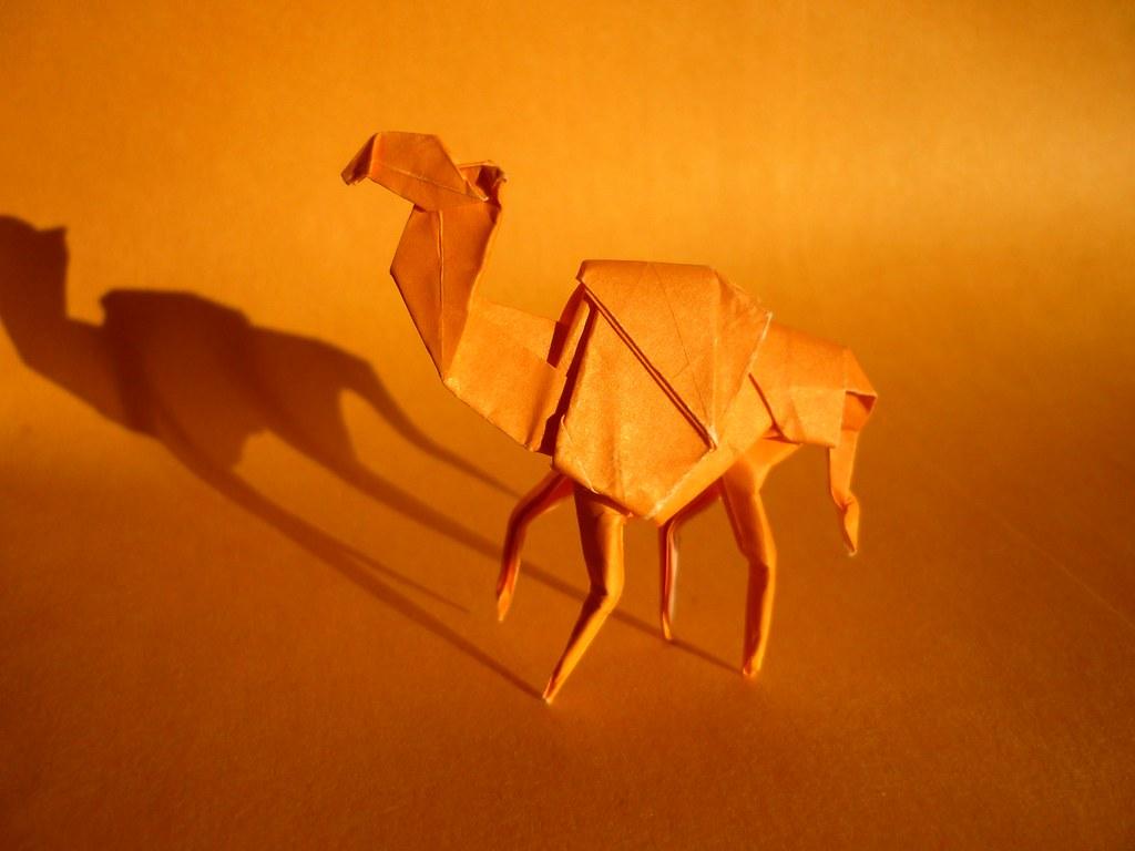 Dromedary Camel, Ryan MacDonell