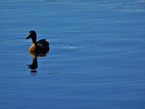 brincando no azul da manhã by Odete de Paula