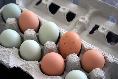 eggs 046