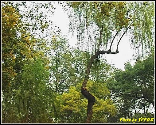 杭州 西湖 (其他景點) - 583 (西湖十景之 柳浪聞鶯)
