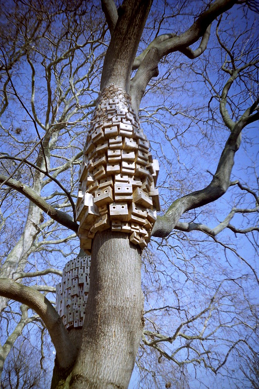Islington Birdboxes