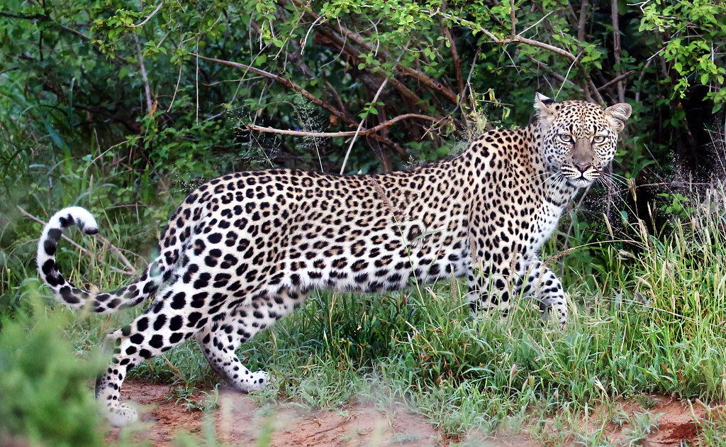 Samburu Kenya