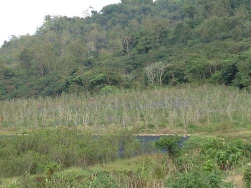 雙峰橋畔的造林地。