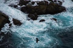 stormy sea, bird