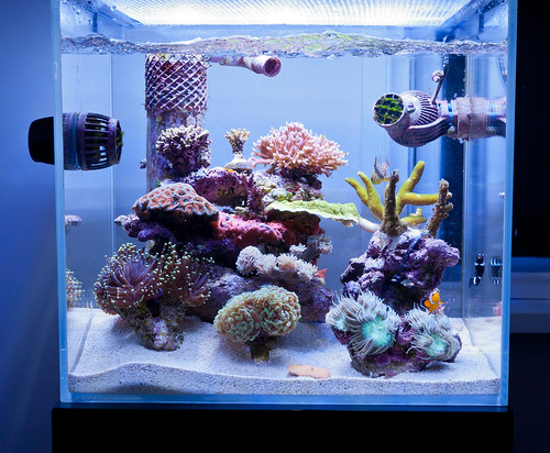 Reefing the australian way forums view topic andrews for Cube saltwater fish tank
