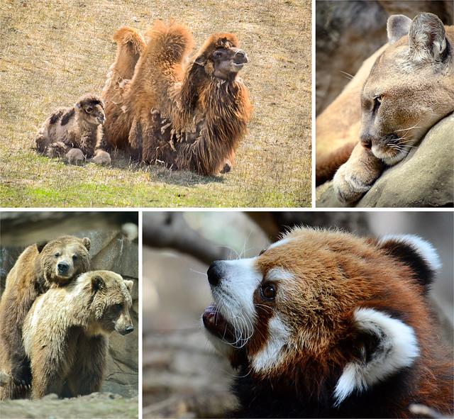Zoo Quad