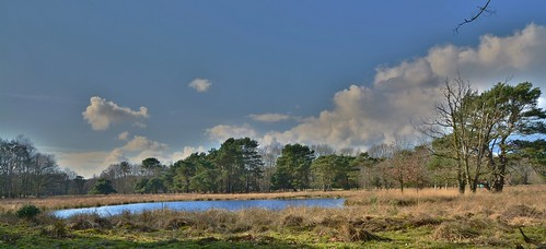 uffelterbinnenveld zwdrenthe havelte uffelte natuurterrein natuurreservaat stichtinghetdrentselandschap natuur natur nature natura panorama ven veen veentie schapen runderen paarsekop wandeling holland thenetherlands