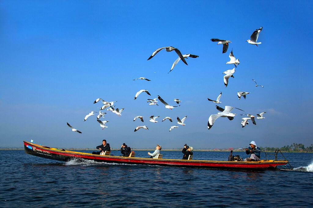勞灼榮_茵湖候鳥
