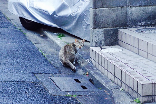 Today's Cat@2017-03-18