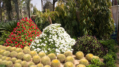 The pyramids of flowers at Egypt's flowers show 2017
