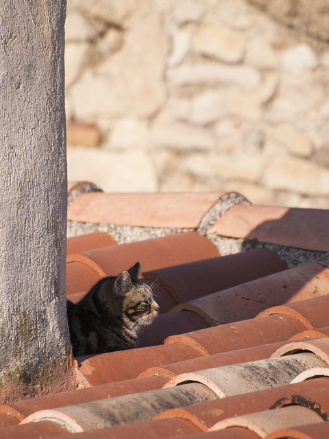 Le chat derrière la cheminée