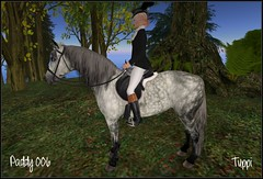 041117 My WH Horse Paddy_006T