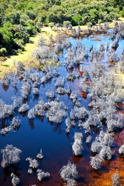 Okavango Delta, Moremi National Park, Botswana, Africa