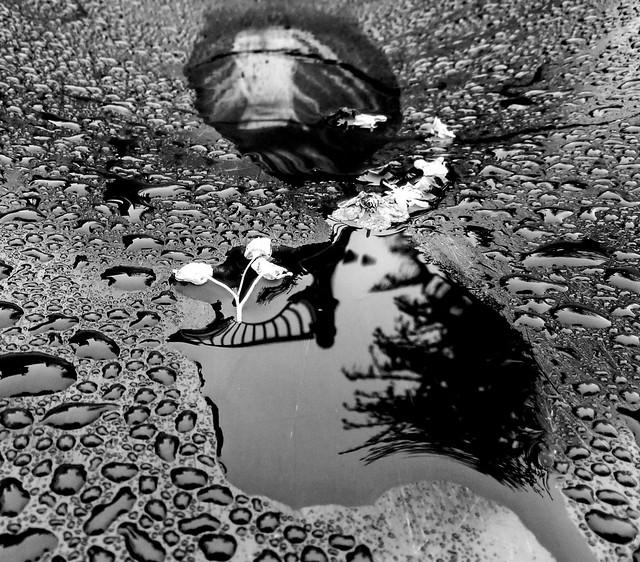 Rain drop reflection, Canon POWERSHOT SX260 HS