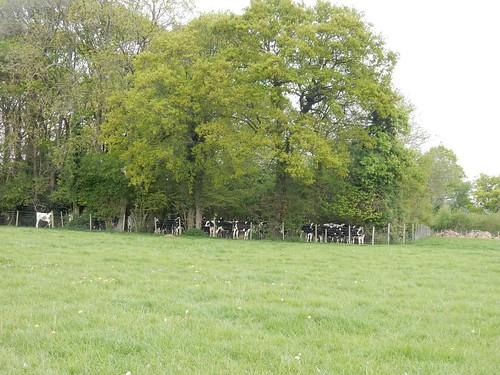 """A """"cow den"""" near Cowden"""