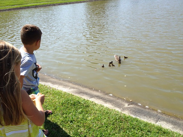 Feeding the baby ducks