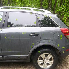 Leaves dot the car after last night\'s storm.