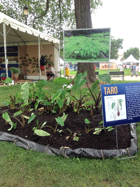 <p>A mini taro patch on the National Mall in Washington D.C. helps demonstrate the connection between Hawaiians, their environment and their language.</p>