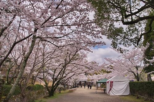 【写真】2013 桜 : 大覚寺/2020-09-15/IMGP9416