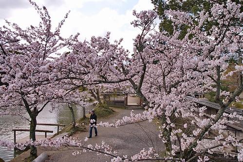 【写真】2013 桜 : 大覚寺/2020-09-15/IMGP9412