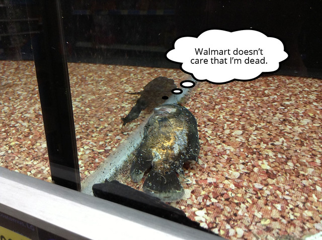 Fish at walmart flickr photo sharing for Fishing license walmart