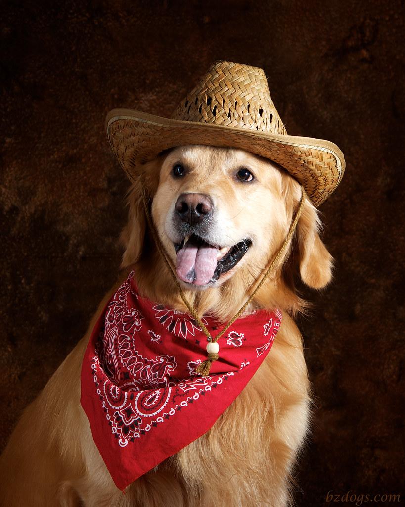 Cowpoke?