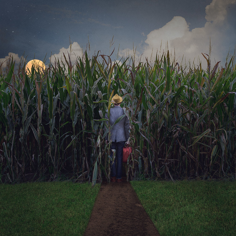 234/365 - The Traveler and the Crop