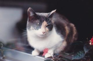Daisy, October 1986