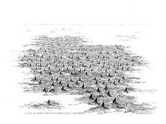 129-sharks