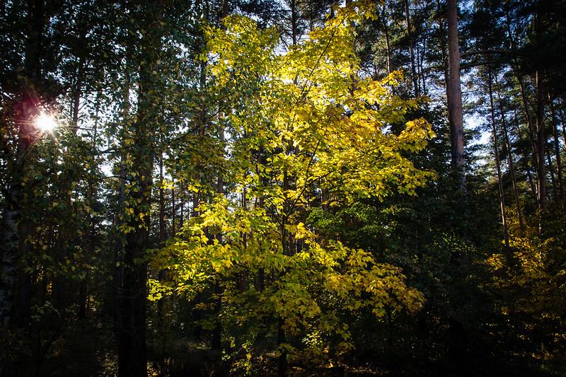 Herbst und Pilze