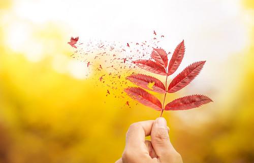 Autumnabilia