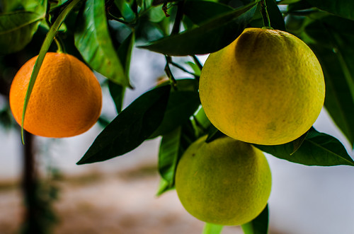 Naranjas 24