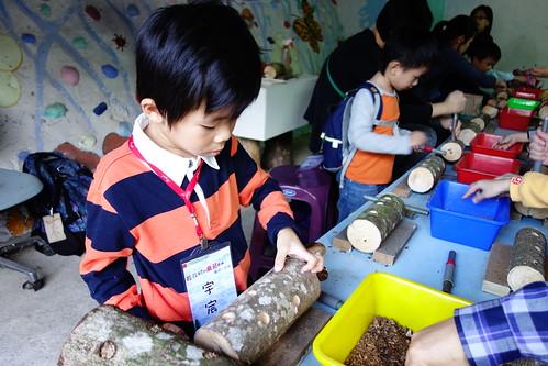 段木木耳DIY