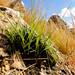 O novo verde no Serrote Quinamuiú - Taua - CE