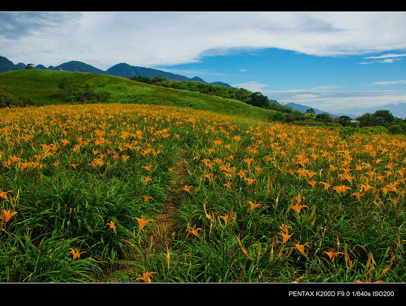 花蓮 六十石山