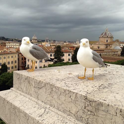 Mögen vor dem Vatikan
